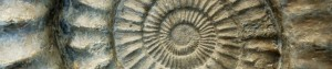 cropped-nautilus-fossil.jpg