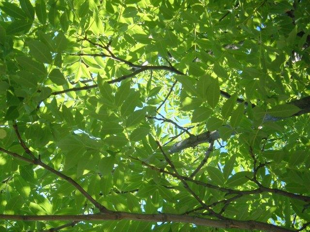 Tree June 2011