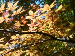leaves turning at Cambira Castle