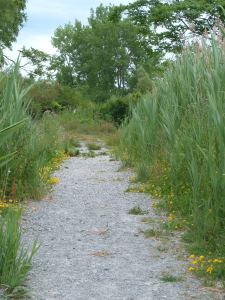 Tifft Nature Preserve path