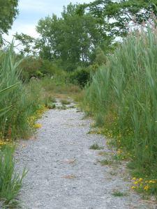 Tifft Nature Preserve path